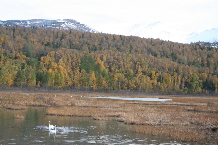9-30-2012 swans_0040