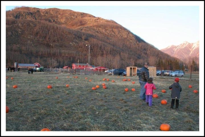 fallfestival10