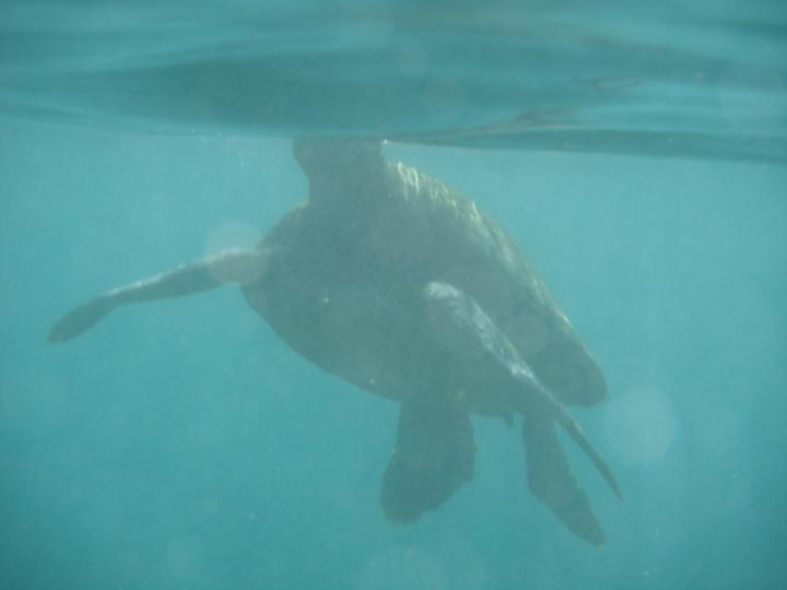 11-24-2012 underwater (10)