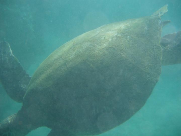 11-24-2012 underwater (11)