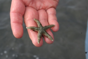bishops beach homer alaska sea star