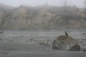 bishop's beach homer alaska eagle
