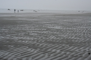 bishop's beach homer alaska low tide