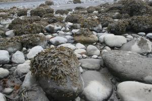 bishops beach rocks