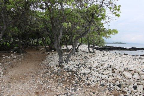 trail (4)